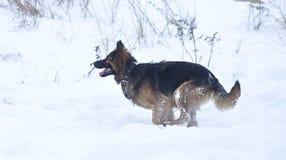 Τρέχοντας σκυλί Στοκ Εικόνα