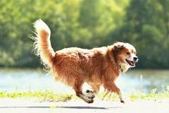Τρέχοντας σκυλί Στοκ φωτογραφία με δικαίωμα ελεύθερης χρήσης
