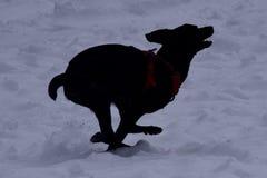 τρέχοντας χιόνι σκυλιών Στοκ Φωτογραφίες