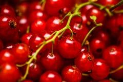 Τρέχων - κόκκινα φρούτα Στοκ Εικόνα