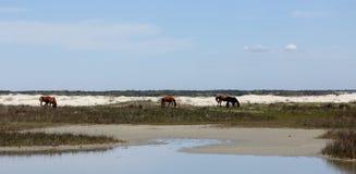 Τρία άγρια άλογα που βόσκουν μεταξύ των αμμόλοφων ενός νησιού στοκ φωτογραφίες