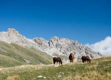 τρία άλογα στο μεσημεριανό γεύμα στοκ φωτογραφία