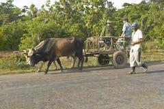 Τρία άτομα ταξιδεύουν με ένα συρμένο άλογο κάρρο μέσω της επαρχίας της κεντρικής Κούβας Στοκ εικόνα με δικαίωμα ελεύθερης χρήσης