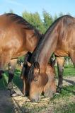 Τρία άλογα Στοκ εικόνες με δικαίωμα ελεύθερης χρήσης