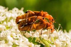 Τρία έντομα είναι πολυάσχολα στο συγκεκριμένο σταθμό τους Στοκ Φωτογραφίες