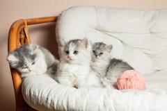 Τρία γκρίζα γατάκια Στοκ φωτογραφία με δικαίωμα ελεύθερης χρήσης