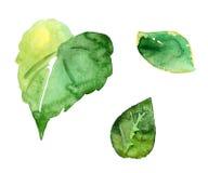 Τρία γραφικά φύλλα watercolor Στοκ Εικόνες