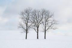 Τρία γυμνά δέντρα που στέκονται κατ' ευθείαν αρχειοθετημένη του χιονιού μια νεφελώδη ημέρα στοκ φωτογραφία