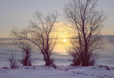 Τρία δέντρα στην ανατολή το χειμερινό πρωί στοκ εικόνα με δικαίωμα ελεύθερης χρήσης