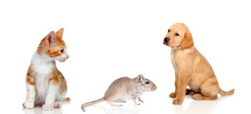 Τρία διαφορετικά κατοικίδια ζώα Στοκ Εικόνες