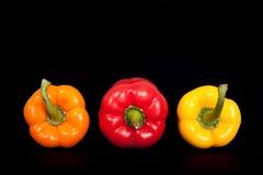 Τρία εγχώρια πιπέρια στο καθαρό μαύρο υπόβαθρο Πιπέρι εγχώριων κουζινών Στοκ Εικόνα