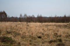 Τρία ελάφια σε έναν τομέα της άγριας χλόης στοκ φωτογραφίες