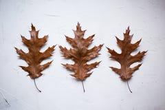τρία ζωηρόχρωμα φύλλα φθινοπώρου στο άσπρο κατασκευασμένο υπόβαθρο στοκ εικόνες