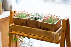 Τρία διαφορετικά χρώματα χρώματος των λουλουδιών Στοκ Φωτογραφία