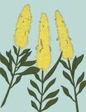 Τρία κίτρινα λουλούδια στο σύγχρονο επίπεδο ύφος, dolphiniums Στοκ φωτογραφίες με δικαίωμα ελεύθερης χρήσης