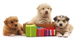 Τρία κουτάβια με τα δώρα στοκ εικόνες με δικαίωμα ελεύθερης χρήσης