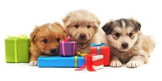 Τρία κουτάβια με τα δώρα στοκ εικόνα με δικαίωμα ελεύθερης χρήσης