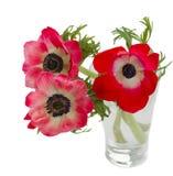 Τρία κόκκινα λουλούδια anemone Στοκ εικόνα με δικαίωμα ελεύθερης χρήσης