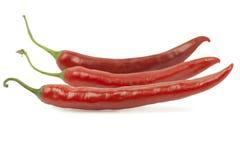 Τρία κόκκινα πιπέρια τσίλι Στοκ Εικόνες