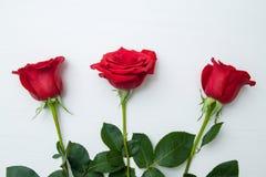 Τρία κόκκινα τριαντάφυλλα στο άσπρο ξύλινο υπόβαθρο διάστημα αντιγράφων - βαλεντίνοι και μητέρα Women' 8 Μαρτίου έννοια ημέρα στοκ εικόνα