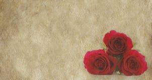 Τρία κόκκινα τριαντάφυλλα στο υπόβαθρο περγαμηνής στοκ εικόνες