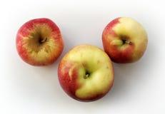 Τρία κόκκινος-κίτρινο Apple Στοκ Εικόνες