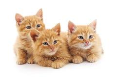 Τρία μικρά γατάκια στοκ εικόνα με δικαίωμα ελεύθερης χρήσης