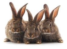 Τρία μικρά κουνέλια στοκ εικόνες