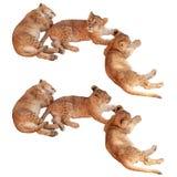 Τρία μικρά cubs λιονταριών που κοιμούνται και που στηρίζονται τον καθορισμό Στοκ Φωτογραφία