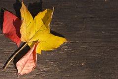 Τρία ξεραίνουν τα φύλλα στην ξύλινη ανασκόπηση Στοκ Φωτογραφίες