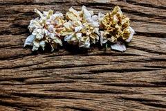 Τρία ξηρά ρόδινα τριαντάφυλλα σε ξύλινο Στοκ φωτογραφία με δικαίωμα ελεύθερης χρήσης