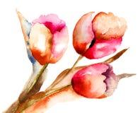 Τρία λουλούδια τουλιπών Στοκ Εικόνες