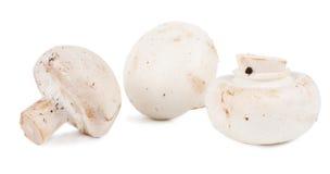 Φρέσκα άσπρα μανιτάρια κουμπιών Στοκ Φωτογραφία