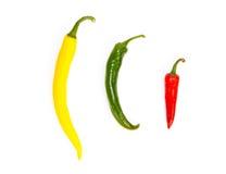 Τρία πιπέρια σε μια σειρά στα διαφορετικά χρώματα Στοκ Φωτογραφία