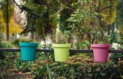 Τρία πολύχρωμα flowerpots στην οδό στοκ εικόνες