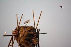 Τρία πουλιά Στοκ φωτογραφίες με δικαίωμα ελεύθερης χρήσης