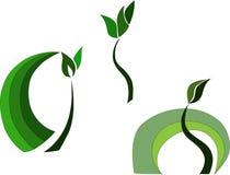 Τρία πράσινα φυτά με τα φύλλα, νεαροί βλαστοί ελεύθερη απεικόνιση δικαιώματος