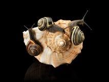Τρία σαλιγκάρια και κοχύλι θάλασσας Στοκ φωτογραφία με δικαίωμα ελεύθερης χρήσης
