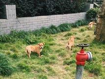 Τρία σκυλιά στον τομέα Στοκ Φωτογραφία
