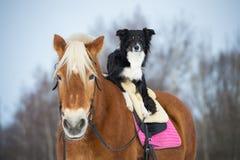 Τρία σκυλιά στο γκρίζο υπόβαθρο, κόλλεϊ συνόρων, poodle και μίγμα Στοκ φωτογραφία με δικαίωμα ελεύθερης χρήσης
