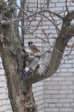 Τρία σπουργίτια σε ένα δέντρο Στοκ φωτογραφία με δικαίωμα ελεύθερης χρήσης