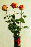 Τρία τριαντάφυλλα σε ένα βάζο στοκ εικόνες