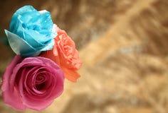 Τρία τριαντάφυλλα στοκ εικόνα