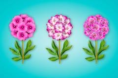 Τρία φανταχτερά λουλούδια σε ένα τυρκουάζ υπόβαθρο Η σύνθεση του ρόδινου lavatera ανθίζει, gladiolus και peonies Αντικείμενο τέχν στοκ φωτογραφίες με δικαίωμα ελεύθερης χρήσης