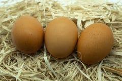 Τρία φρέσκα αυγά δίπλα-δίπλα σε μια χάντρα του αχύρου στοκ φωτογραφίες