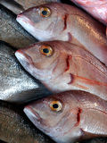 Τρία φρέσκα ψάρια Στοκ εικόνα με δικαίωμα ελεύθερης χρήσης