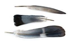 Τρία φτερά στοκ εικόνα με δικαίωμα ελεύθερης χρήσης