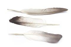 Τρία φτερά στοκ φωτογραφίες με δικαίωμα ελεύθερης χρήσης