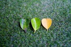 Τρία φύλλα στην τεχνητή χλόη στοκ εικόνα με δικαίωμα ελεύθερης χρήσης