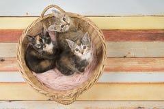 Τρία χαριτωμένα γατάκια γατών μωρών σε ένα ψάθινο καλάθι που ανατρέχει Στοκ Φωτογραφία